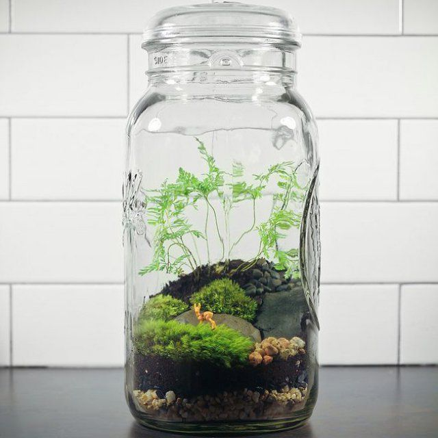 1000 id es sur le th me terrarium bocaux sur pinterest pi ges mouches terrarium pour. Black Bedroom Furniture Sets. Home Design Ideas
