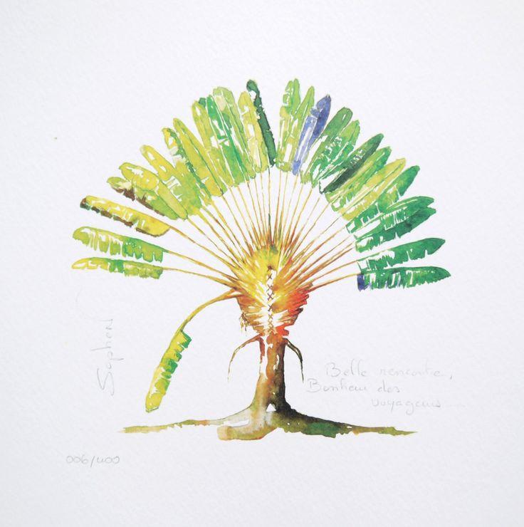 L 39 arbre des voyageurs dessin recherche google arbre du - Voyageur dessin ...