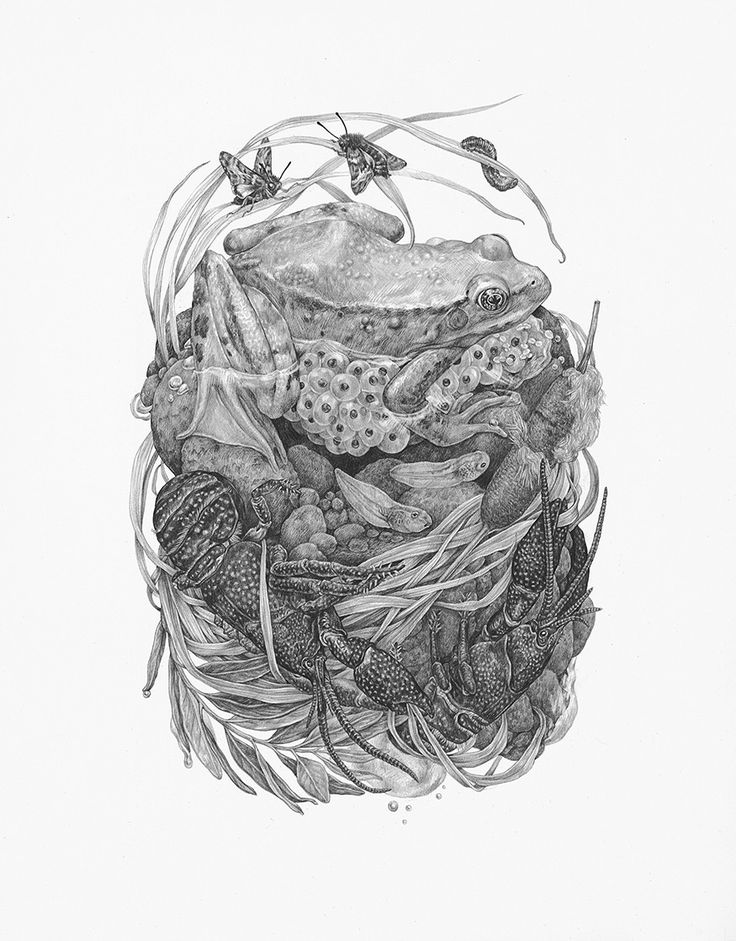 Graphite Illustrations That Explore the Detailed Relationships of the Natural World by Zoe Keller | Colossal