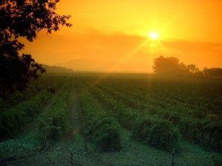 Napa Valley Vineyards!