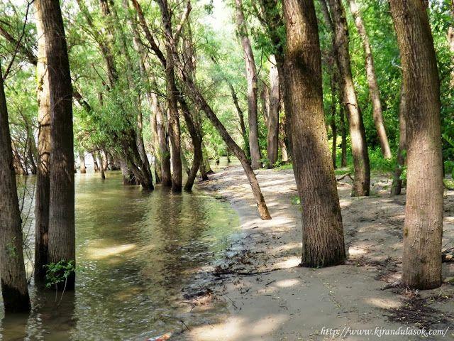Kirándulások - természetjárás: A Népsziget és a Palotai-sziget