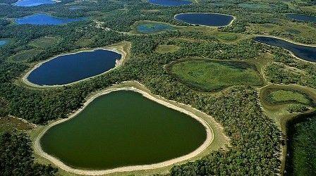 Pantanal - Pesquisa Google