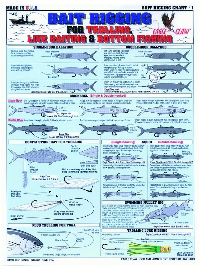 Bait Rigging Charts Saltwater Fishing Fishing Techniques Fishing Rigs