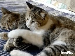 Awwww! The ultimate cuddle pillow!