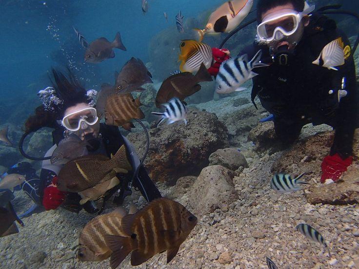 魚もたくさんで最高にきれいな沖縄の海! - http://www.natural-blue.net/blog/info_10095.html
