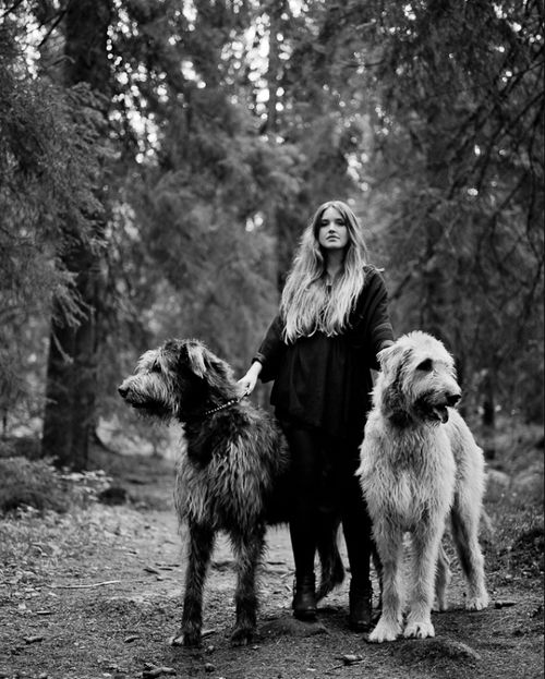 Wolf hounds and primate.