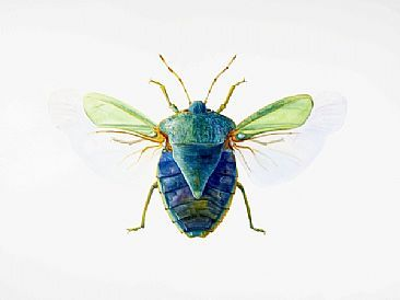 Stink bug art | Green Stink Bug - insect, stink bug, beetle by Dinah Wells