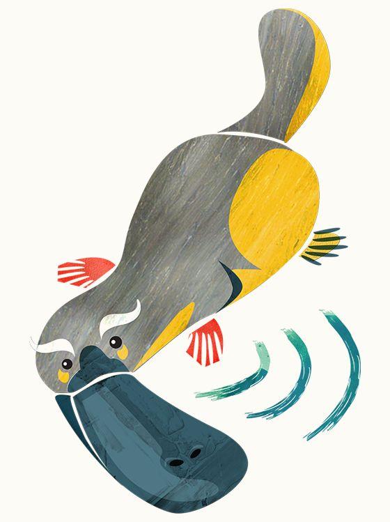 Happy platypus illustration for wine labels - Leanne Bock. Australian / art / design / animals.