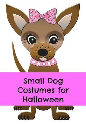 Small dog costumes for Halloween and a lot of other funny outfits for #dogs. Please visit pawsrighthere.com