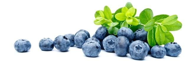 Large Blueberry Plants for Sale - True Vine Ranch, Bonner Springs, KS   Order 4 year old bush for $50 in October