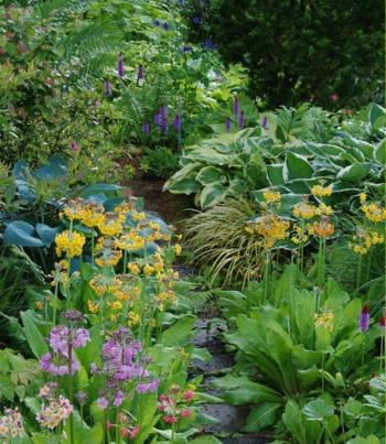 pflanzen f r schattige pl tze garden pinterest. Black Bedroom Furniture Sets. Home Design Ideas
