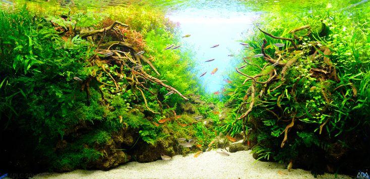 the 2nd Round Grading, TOP 200 Layouts | The International Aquatic Plants Layout Contest, IAPLC http://www.adana.co.jp/iaplc2012/en/top200vote/