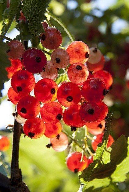 spring   www.KuferArt.pl