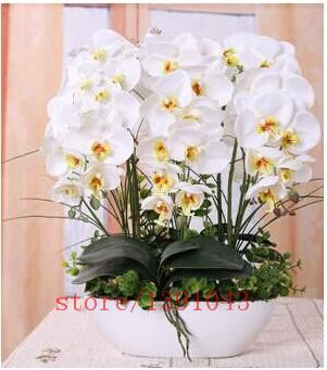 100pcs orchid seeds, phalaenopsis orchid, bonsai hydroponic flower seeds for four seasons potted plants for home garden