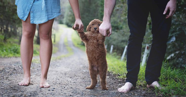 Tired Of Being Asked About Babies, This Couple Did A Newborn Photoshoot With Their Dog | Bored Panda