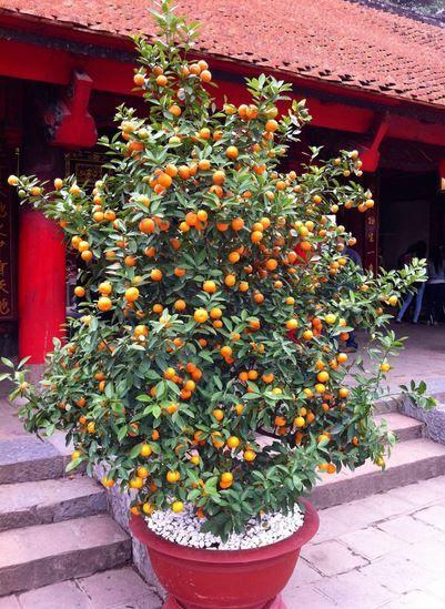 Les 25 meilleures id es de la cat gorie plantes en pot sur pinterest - Taille de l abricotier ...