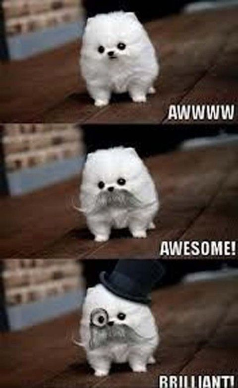 funny animals quotes 45 pictures | Funny pictures
