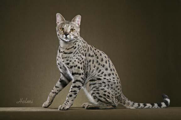 egyptian cat god name