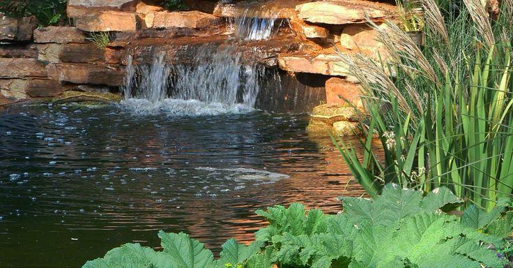Fynbos Landscapes | Koi Ponds Project 1