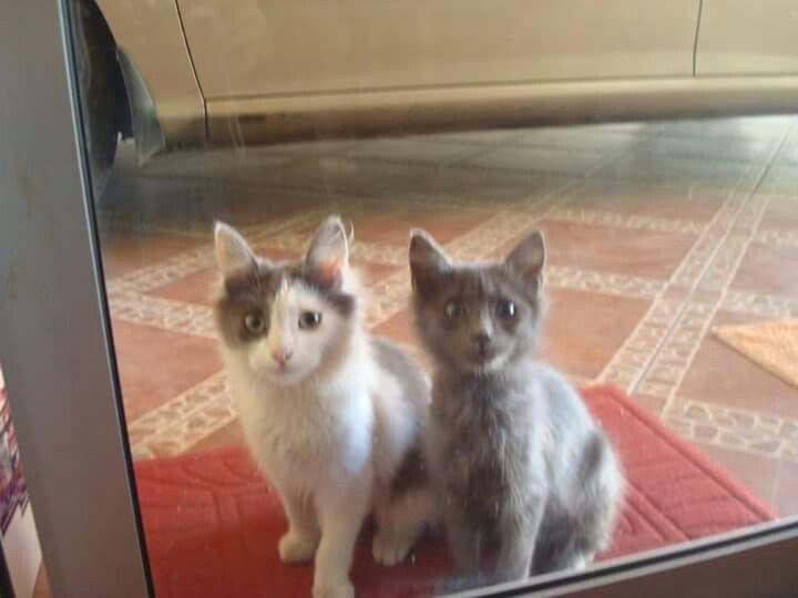 Mi Tom & Jim desde pequeños