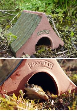 Great time to invest in a Frogitat... Ceramic toad/frog house. Or as I did. Just an old pot with a hole in it. Put some leaves in there and tadaa. Make sure kitty can't reach in though.