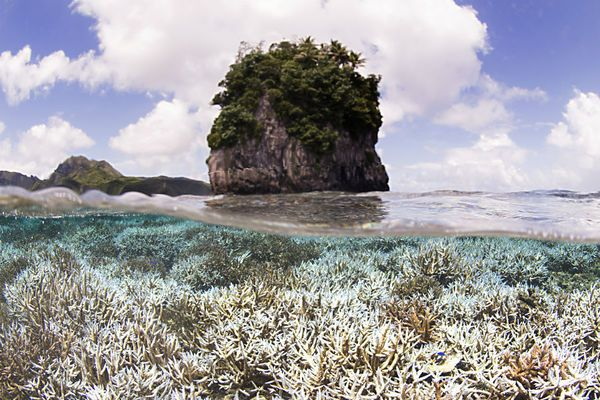 Widespread bleaching threatens Great Barrier Reef: why that ...
