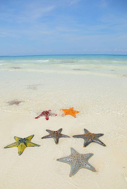 Starfish on the beach. Nungwi Beach, Zanzibar, Tanzania >>> So many colors!