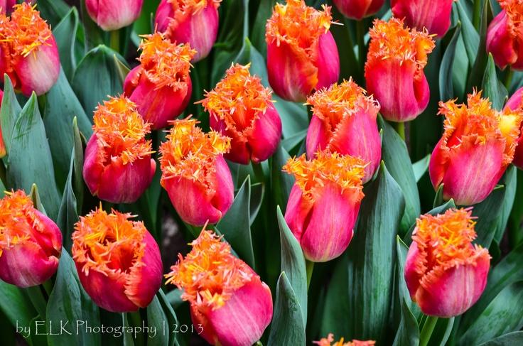 #Lente... #byELKmedia, #HollandFoodFlowers, #Bovenkarspel, #NH