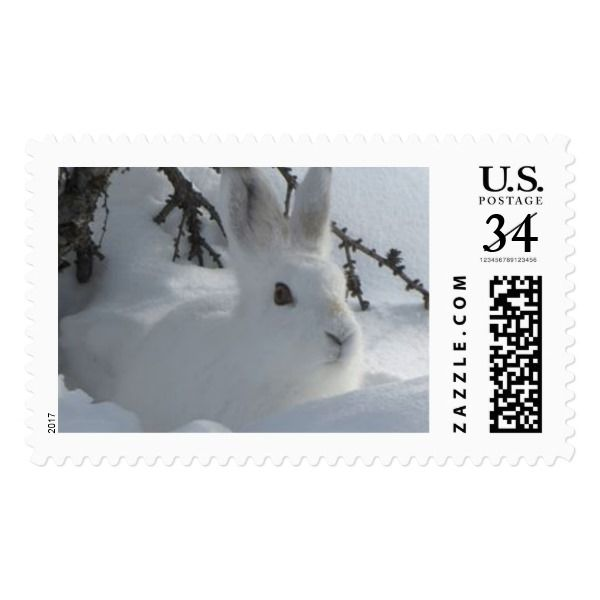 WHITE HARE IN SNOW POSTAGE FOR POSTCARDS #christmas #postage #stamps