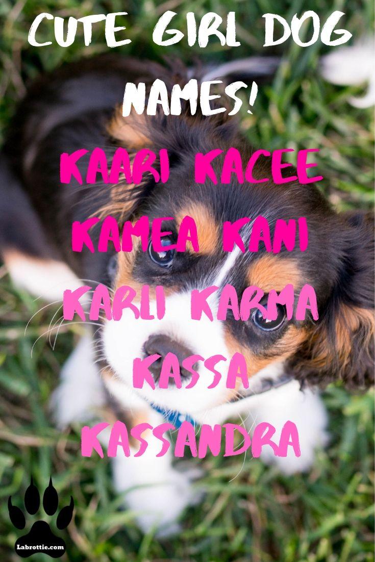 300 Girl Dog Names A Z Girl Dog Names Girl And Dog Dog Names