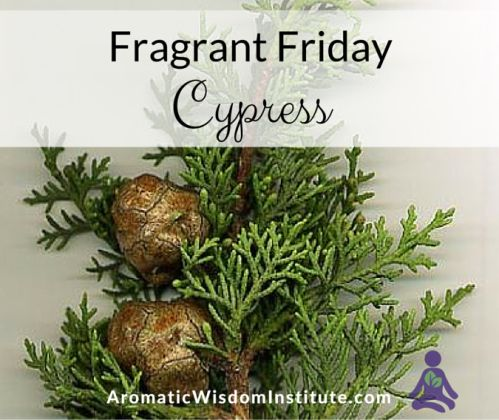If you are bothered by varicose veins, hemorrhoids, or sweaty feet, you'll want to make friends with today's awesome essential oil. Cypress can be a great helper in times of grief or difficult transition.