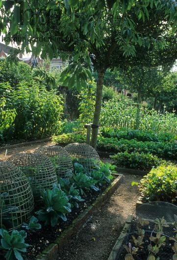 köksträdgård, upphöjda odlingsbäddar, växtskydd i form av korgar