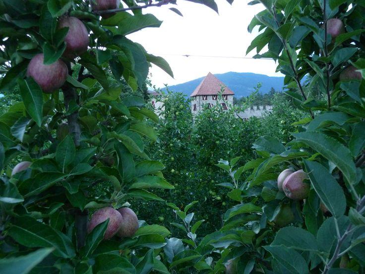 Malgolo, uno sguardo tra i meli..