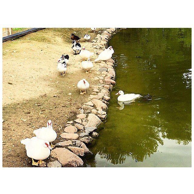 ������ #monteurpinu #parco #parcodimonteurpinu #laghetto #fauna #natura #verde #nature #view #park #cagliari #casteddu #karalis #sardegna #sardinia #igers #igerssardegna #igsardegna #visitsardinia #visitcagliari #sardegnagram #sardegnaofficial #sardegnaexperience #igersitalia #italia #italy #instagram by federicazanda | #Supramonte's - #Sardinia #Sardegna