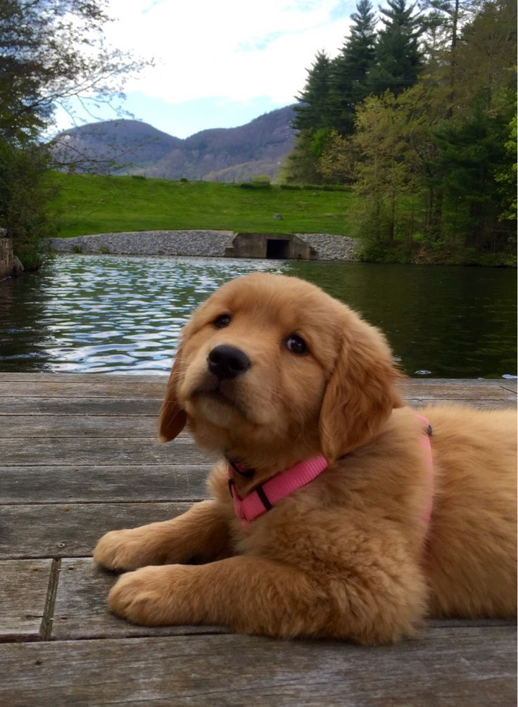 Can I please swim now - Imgur | puppies ️ | Pinterest ...