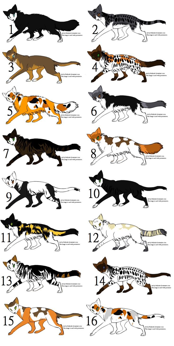 33 best cat oc images on pinterest animal drawings cats and