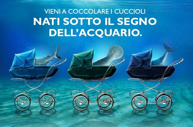 Born under the sign of Acquario di Genova - Nati sotto il segno dell'#AcquariodiGenova  #mantee #AcquarioVillage #dolphins #cub #puppy #genova #italy #aquarium #tourism #leisure