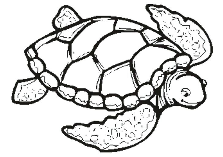 Simple Turtle Coloring Pages Ideas For Kids Turtle Coloring Pages Turtle Drawing Animal Coloring Pages