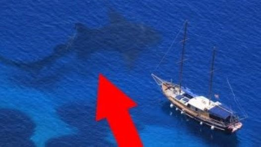 Real MEGALODON Found! - World's Biggest Shark Ever   Megalodons are largest sharks ever! These giant sea creatures didn't go extinct! These monsters are still alive! You'll believe in megalodons existence after this video cause real megalodon was discovered in Black Sea. The enormous being appeared under a boat ...and it's really scary..because this shark is abnormally large... no other shark is so huge even great whites or whale sharks... actually megalodon is like great white but much…