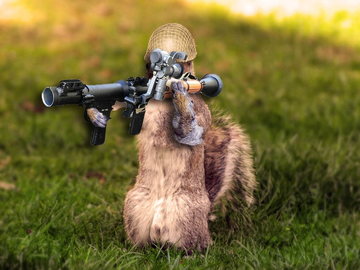 Funny squirrels with guns - Pictures of funny animals with guns ...