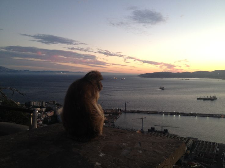 Making friends on the Top of the Rock, #Gibraltar.