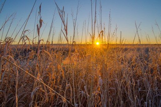 Grasslands National Park is a stunning and special place in Canada, as it is the only National Park in Canada that represents the prairie grasslands natural region. It is considered to be one of t…