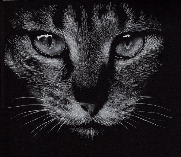 White Pencil On Black Paper Draw Hledat Googlem Art
