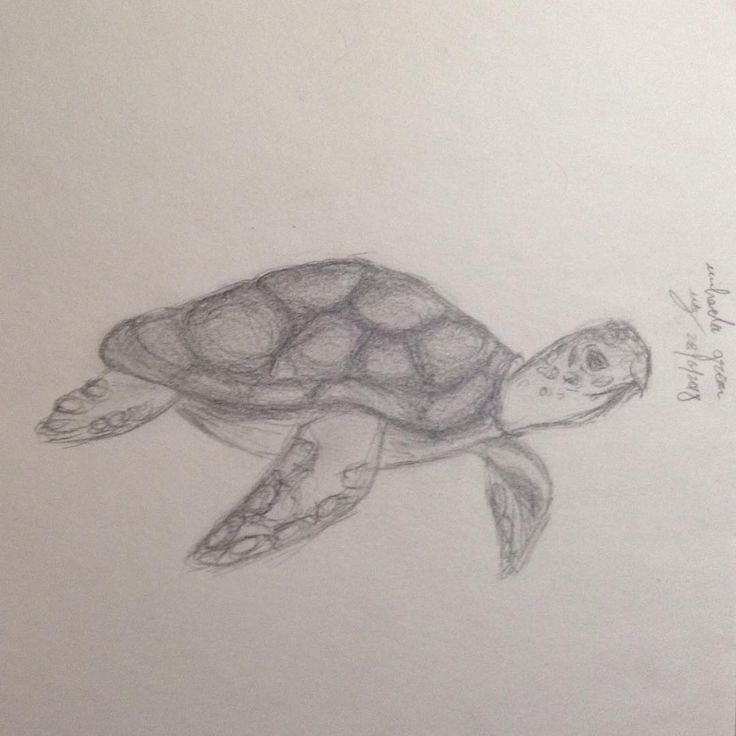 Sea turtle #seaturtle #turtle #drawing #art #ocean #pencil ...