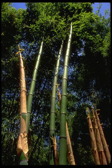 17 Best Bamboo Screens For The Pacific Northwest Images On