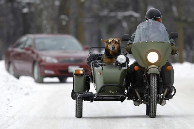 Rowan Horrick and his dog, Doog, ride a 2011 Ural motorcycle in Assiniboine Park Sunday.