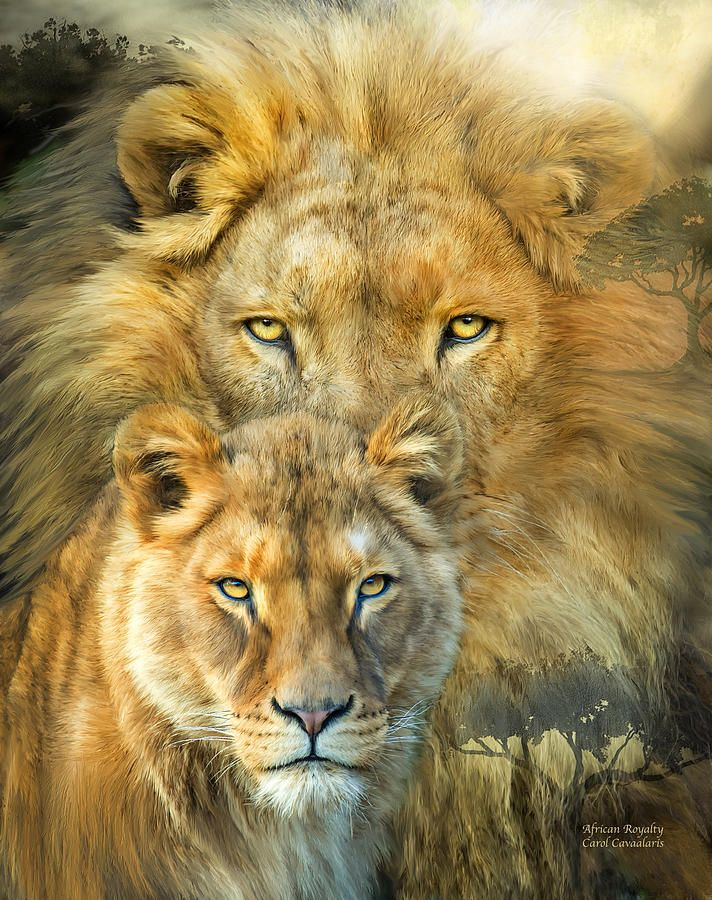 Lion and Lioness Matching Tattoo | Lion And Lioness- African Royalty Mixed Media