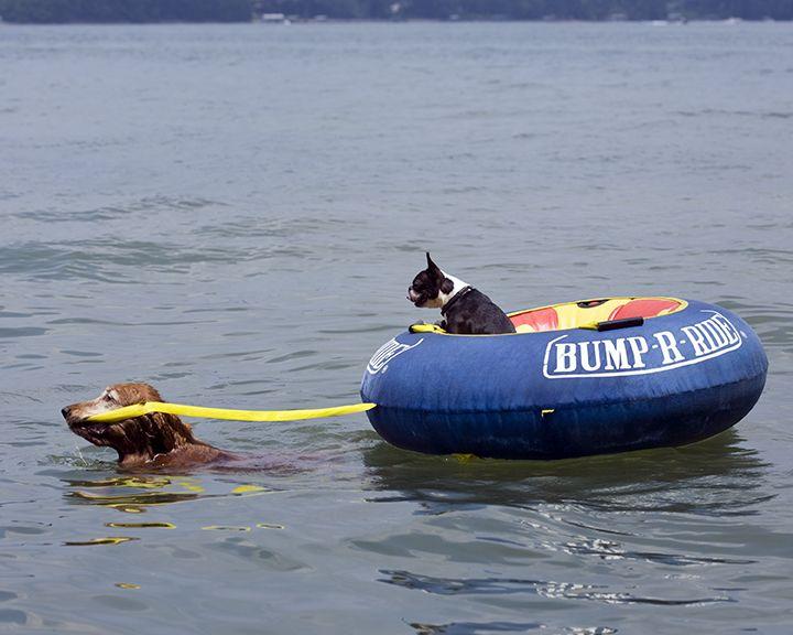 """Deep-sea rescue! """"Swim, my pretty, swim!"""""""