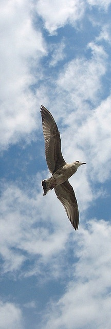 Soar by Brian Sibley, via Flickr