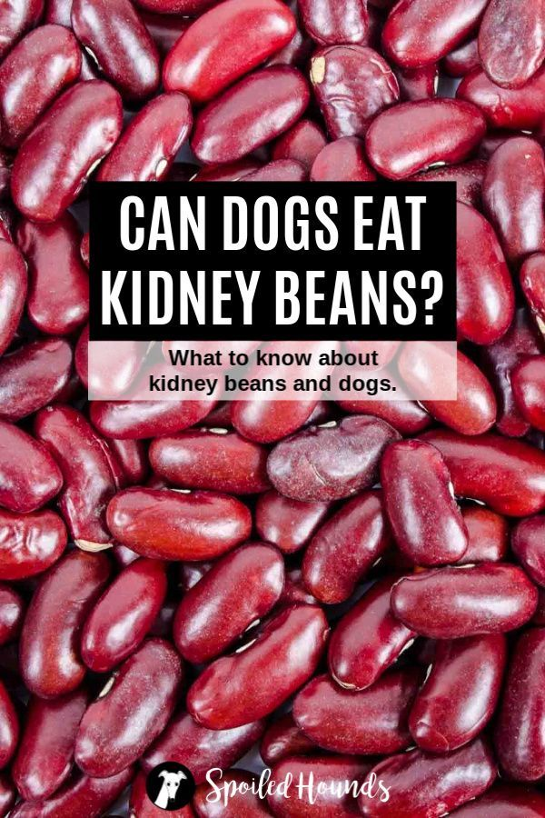 Can Dogs Eat Beans What To Know About Dogs And Beans In 2020 Can Dogs Eat Healthy Dog Food Homemade Healthy Dog Food Recipes
